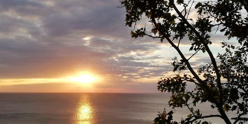 Interessanter Hintergrund Ein Besorgnis erregender und schöner Meerblick durch Baumaste und Sträuche Das Herbstmeer stockbilder