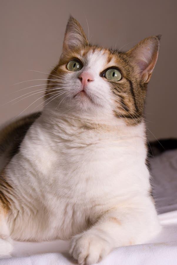 Interesse del gatto immagini stock