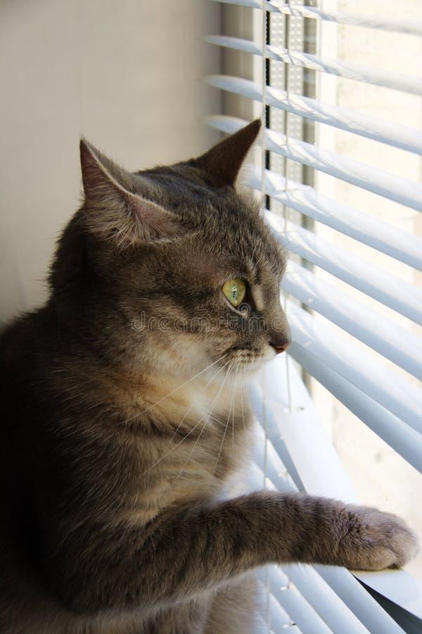 Interesse del gatto fotografia stock libera da diritti