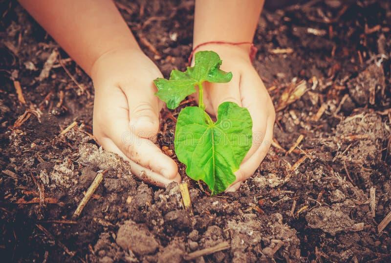 Interessieren für eine neue Lebensdauer Bewässerungsjungpflanzen Die Kind-` s Hände stockbild