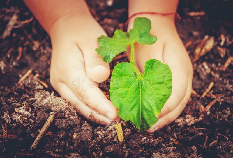 Interessieren für eine neue Lebensdauer Bewässerungsjungpflanzen Die Kind-` s Hände lizenzfreie stockbilder