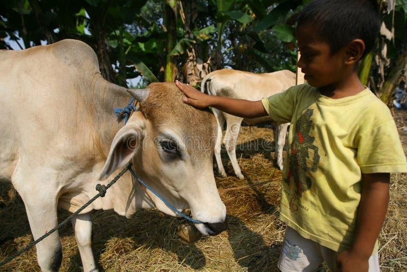 Interessieren für Kuh lizenzfreies stockfoto