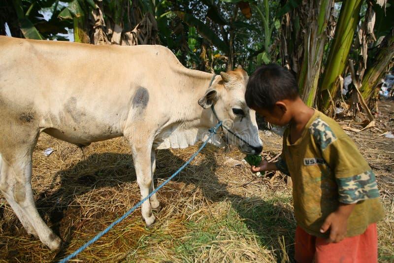 Interessieren für Kuh lizenzfreie stockbilder