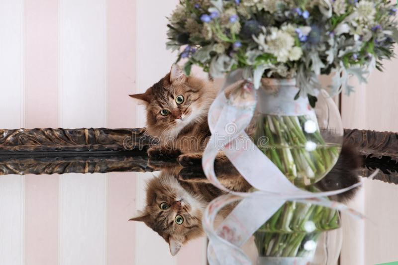 Interested cat with flowers royalty free stock image