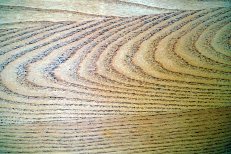 Interesting detail of the structure of a piece of wood royalty free stock photos