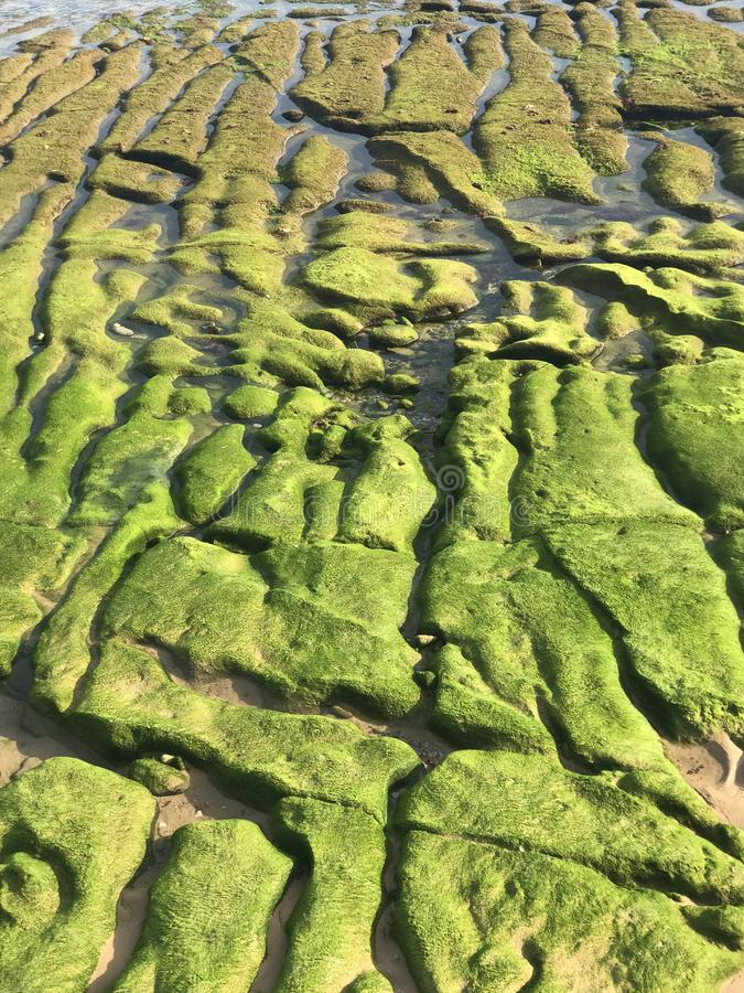 An interesting relief of the Spanish coast - green algae on the stones create a pattern. Texture royalty free stock images