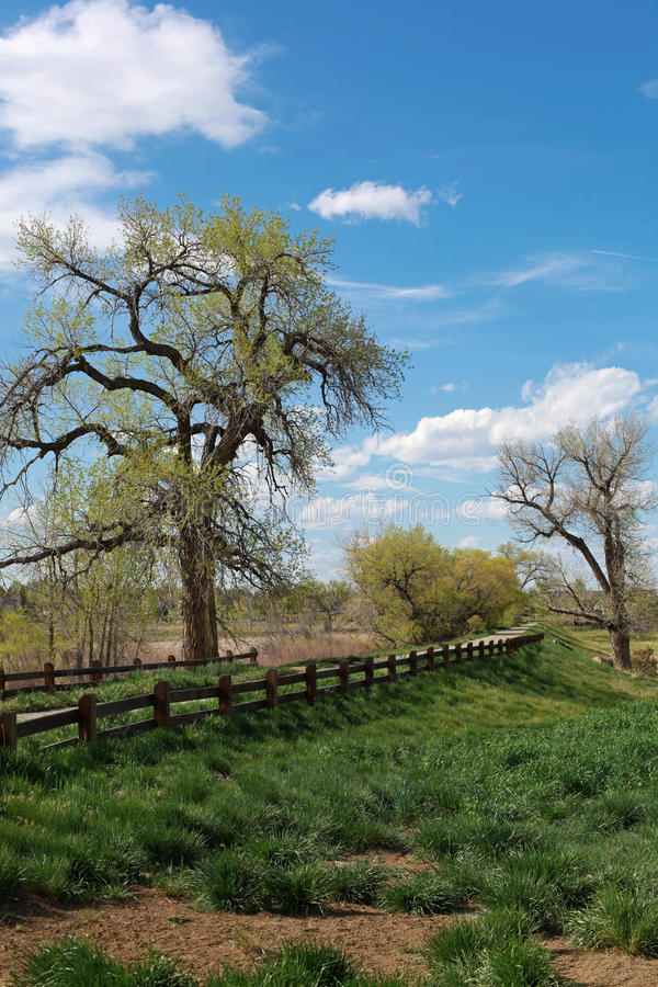Interesting tree on the blue and green background. With wooden fence stock photography