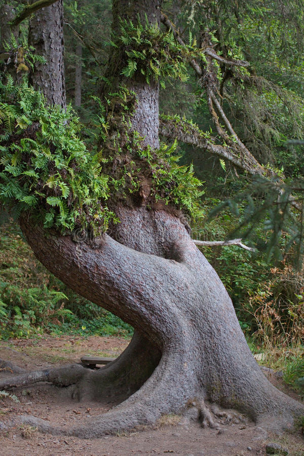Interesting tree with ferns royalty free stock photo