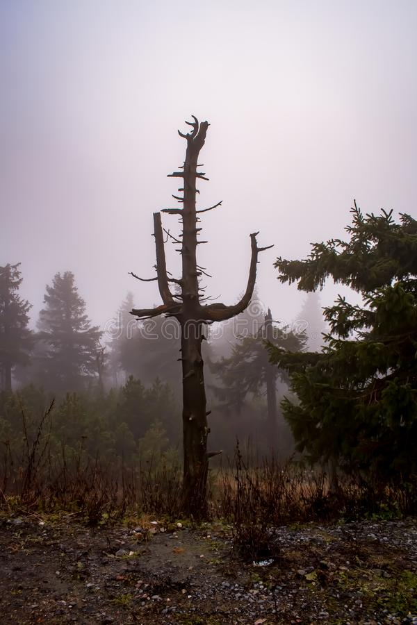 Interesting tree in a lot of fog. royalty free stock images