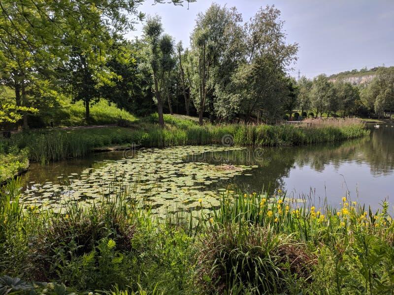 Interesting vegetation ladies lily pads skies. Varies vegetation scene at Bluewater nature walk stock photos