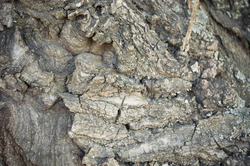 Interesting view of the bark of the old tree. Interesting kind of bark of the old tree with clear fine fragments stock photos