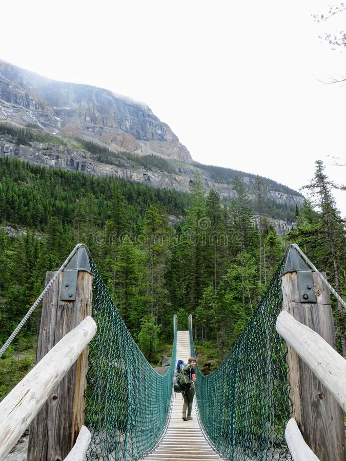 An interesting view of a female hiker looking back as she crosses a suspension bridge high in the remote forests of the rockies. An interesting view of a female stock photos