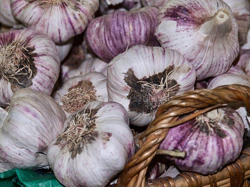 Interi tuberi freschi dell'aglio nelle coperture rosa fotografia stock