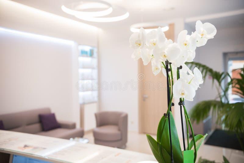 Interior av cosmetologykliniken Beigen färgar Vita blommor på skrivbordet mottagande fotografering för bildbyråer