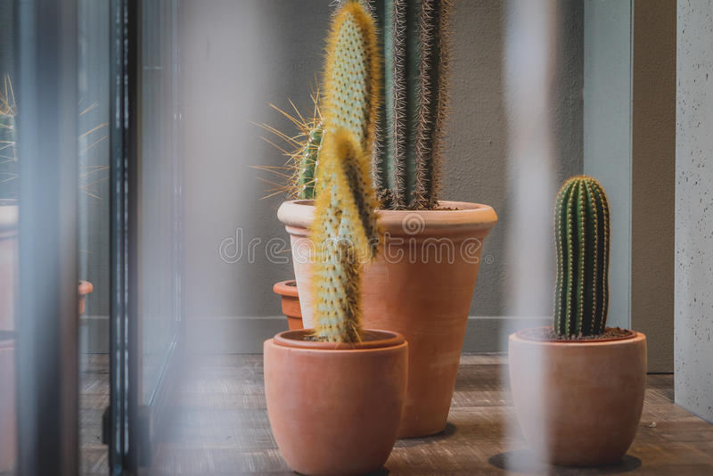 Interior Cactuses royalty free stock photo