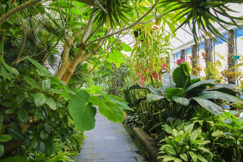 Interior da casa da begônia, Wellington Botanical Garden, Nova Zelândia imagens de stock royalty free