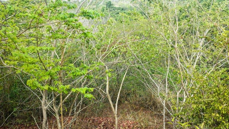 Interior da floresta tropical imagens de stock