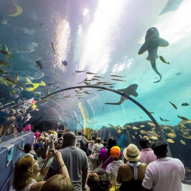 Interior de Georgia Aquarium con la gente imagen de archivo