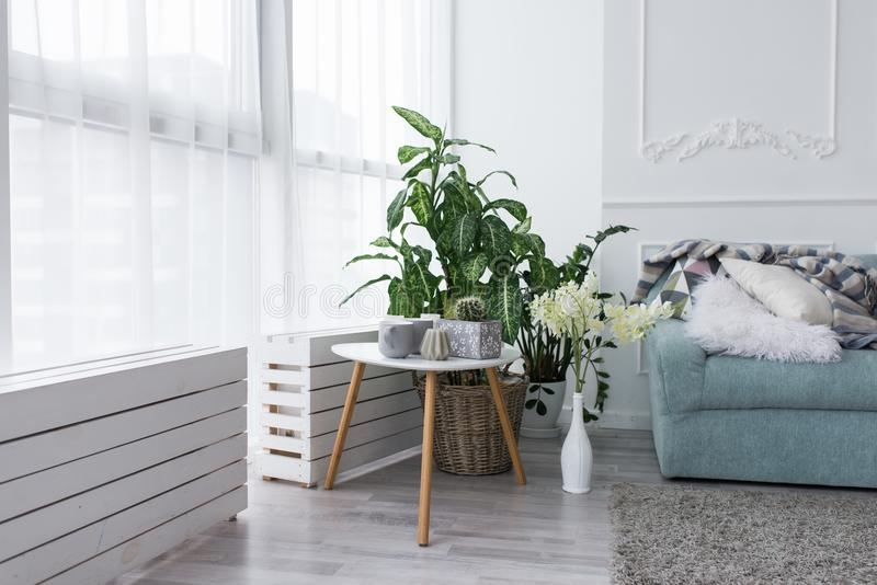 Interior de la sala de estar con un sofá azul y muchas plantas verdes en potes Una pequeña mesa de centro blanca con un cactus, u imagenes de archivo