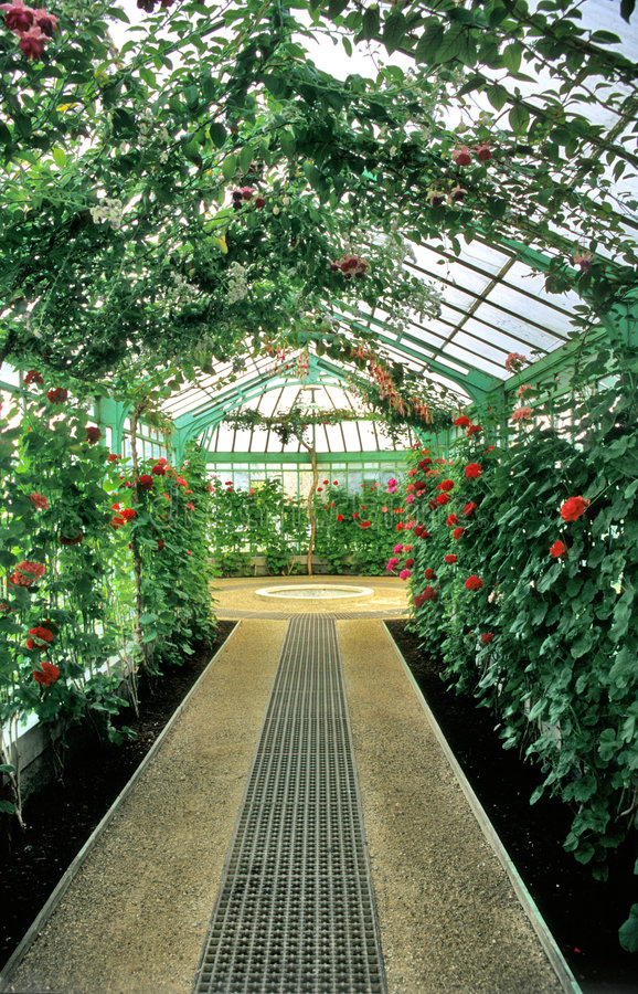 Interior del invernadero foto de archivo libre de regalías