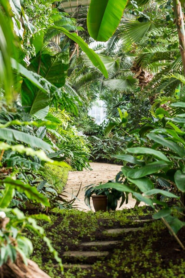 Interior Del Invernadero Tropical De La Selva Plantas Frescas Y ...