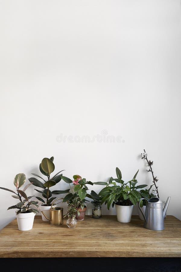 Interior del sitio blanco con las plantas verdes en la tabla de madera rústica Espacio vacío para la disposición de diseño imagenes de archivo
