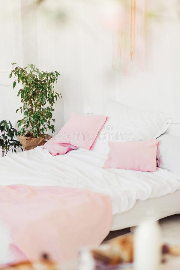 Interior do quarto claro com descansos e o ficus cor-de-rosa imagem de stock royalty free