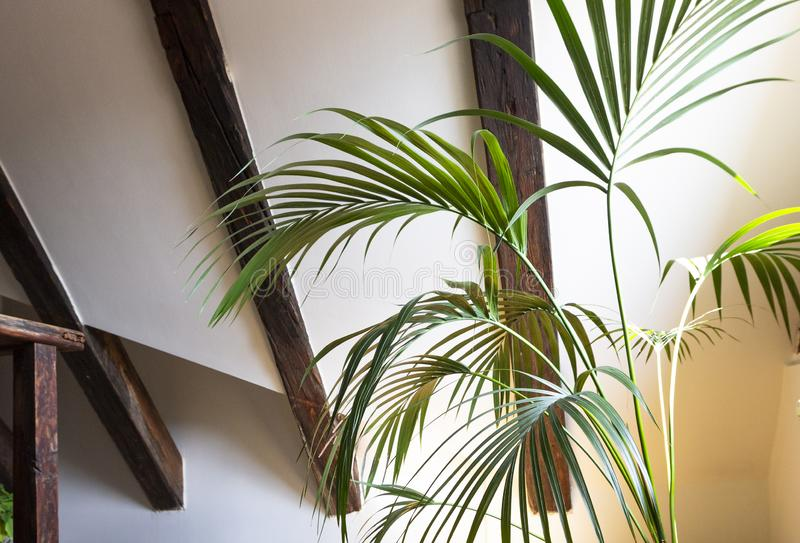 Interior of empty attic floor living room with dark beams ceilings and palm leaves in flower pot with shadow in light background.  royalty free stock photography