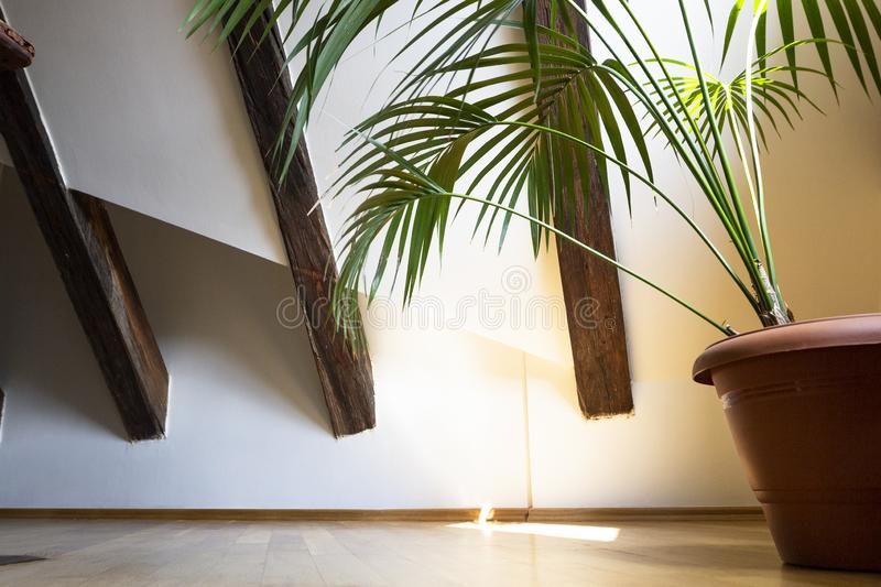 Interior of empty attic floor living room with dark beams ceilings and palm leaves in flower pot with shadow in light background.  stock image