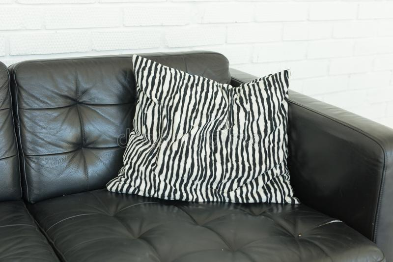 108 Sofa Zebra Photos - Free & Royalty-Free Stock Photos From Dreamstime