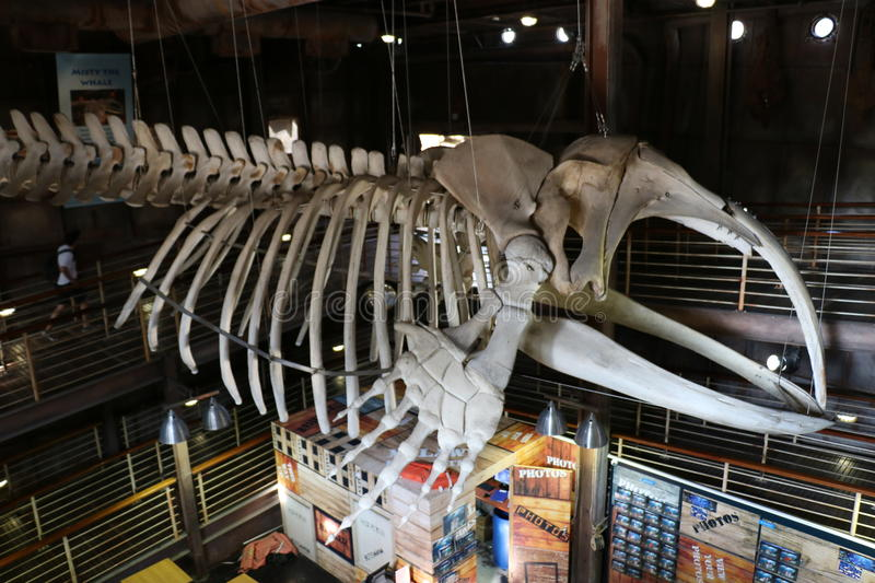 Interior Image of a whale skeleton stock photography