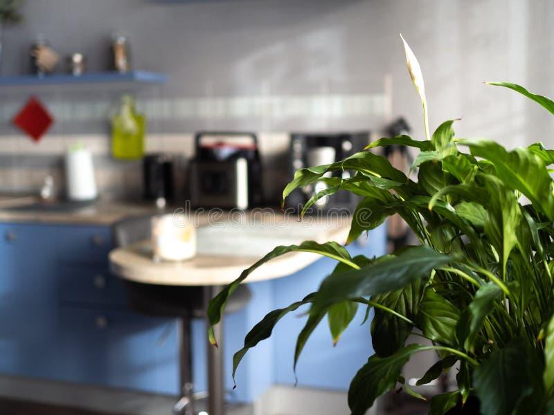 Interior moderno Cozinha do blie de Defocus no fundo imagens de stock royalty free