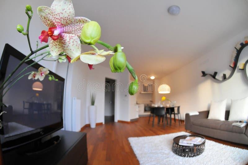 Interior moderno de la sala de estar con la cocina imagen de archivo