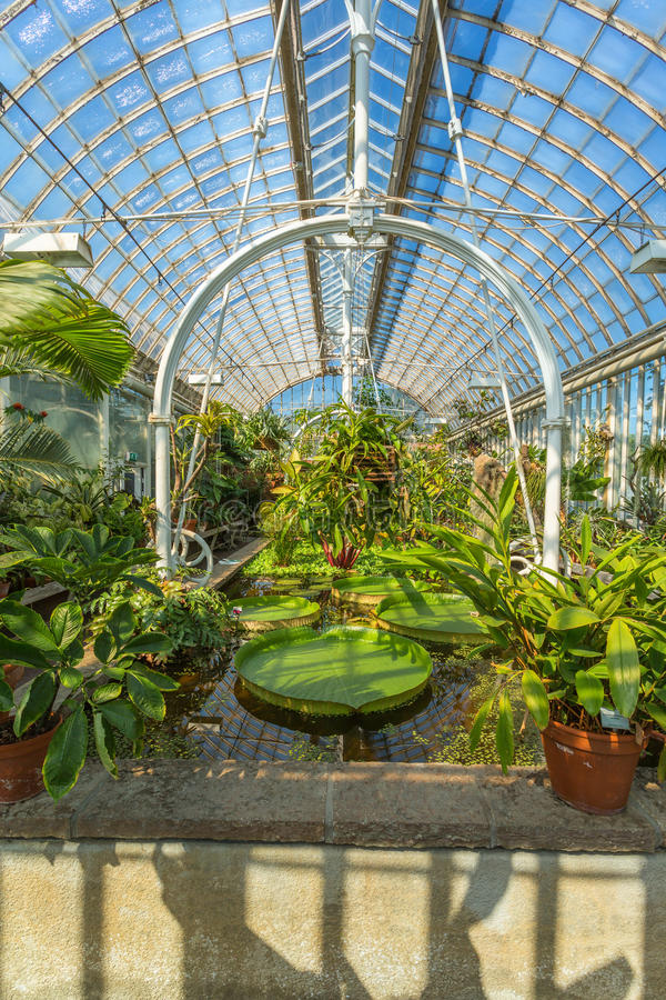 Interior of an old greenhouse royalty free stock photos