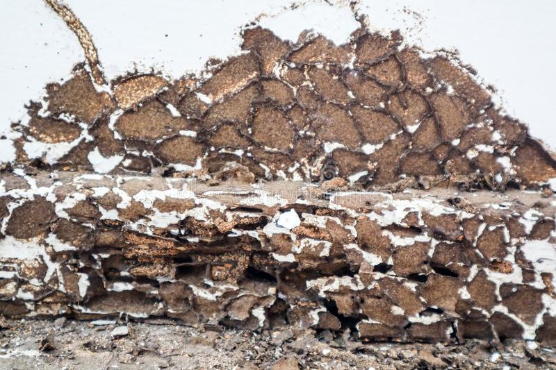 Interior wood was was damaged by termite because this area not s. Pray chemical to protect it royalty free stock images