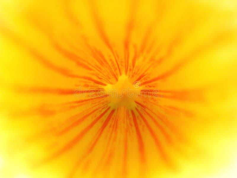 Interiore giallo del fiore fotografie stock libere da diritti