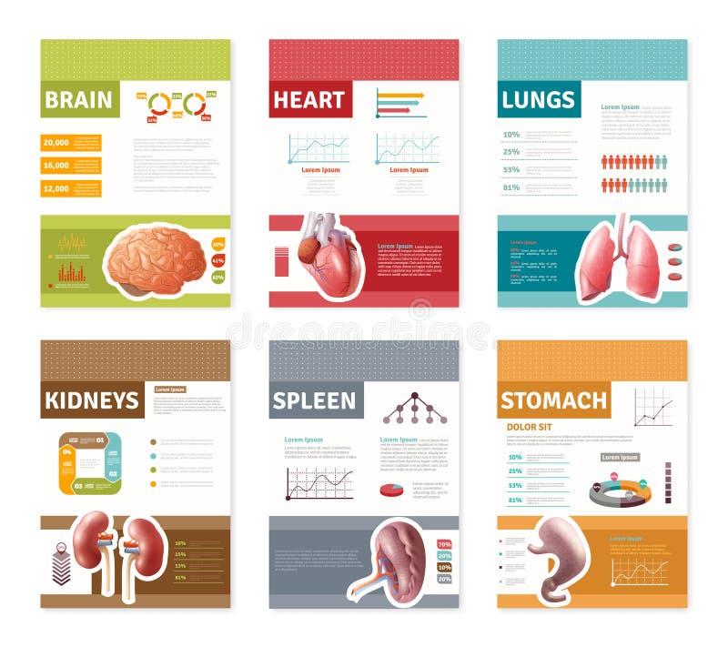 Internal Human Organs Banners stock illustration