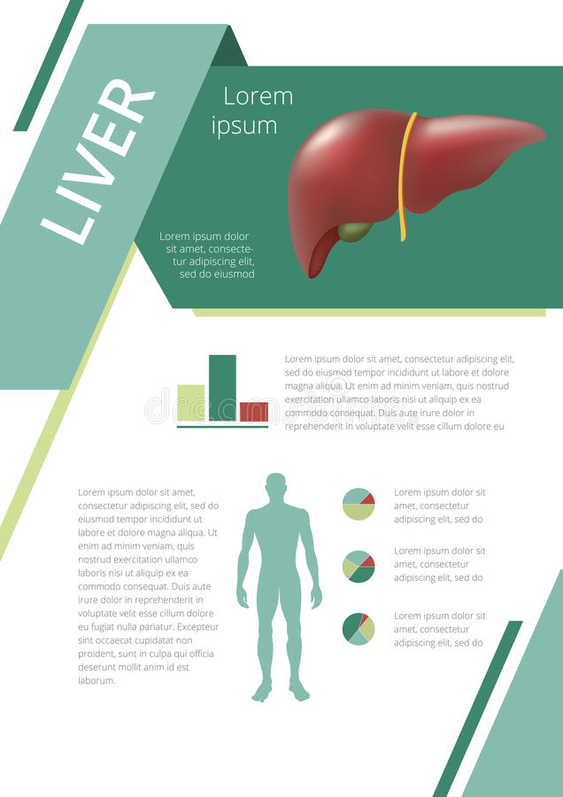 Internal Human Organs Infographic Liver Stock Vector Illustration