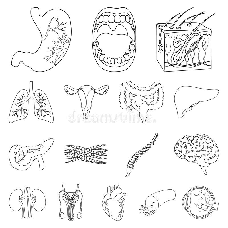 Internal Organs Of A Human Outline Icons In Set Collection For
