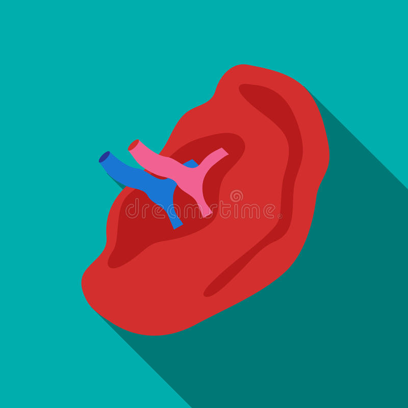 Internal structure of ear icon, flat style vector illustration