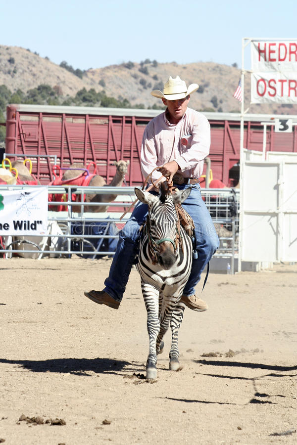 International Camel Races in Virginia City, NV, US