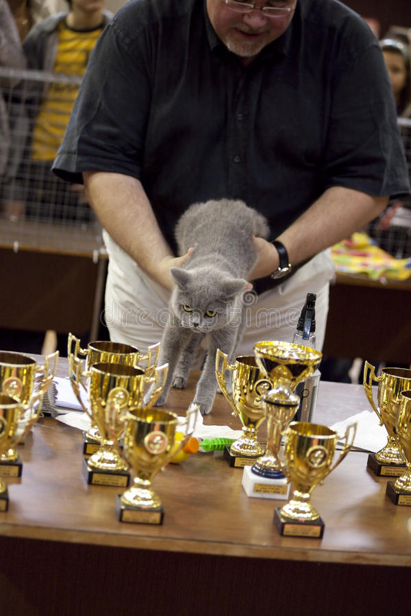 Download International Cat Exhibition Editorial Photo - Image: 16228971