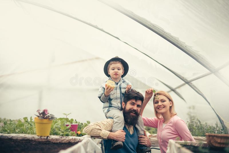 International day of families. international day of families holiday. happy famili celebarte international day of stock photos