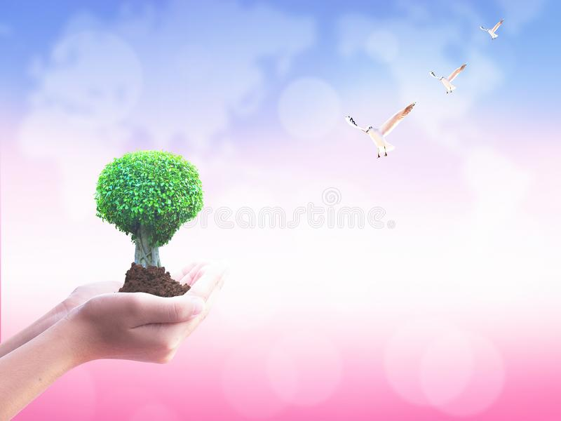 International Day of Friendship concept: Holding big tree in hands stock photos