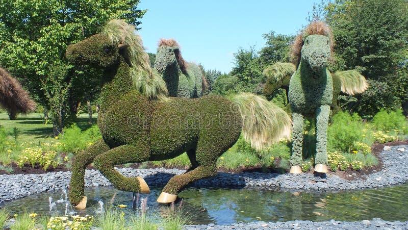 INTERNATIONAL 2013 de MOSAICULTURES, JARDIM BOTÂNICO de MONTREAL, Montreal, Quebeque Entrada canadense: Mãe Terra - cavalos imagens de stock royalty free