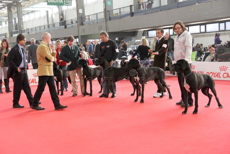 Download International Dog Show Editorial Photo - Image: 22141546