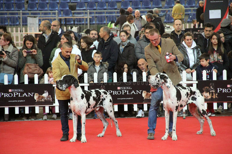 Download International dog show editorial image. Image of gathering - 27821270