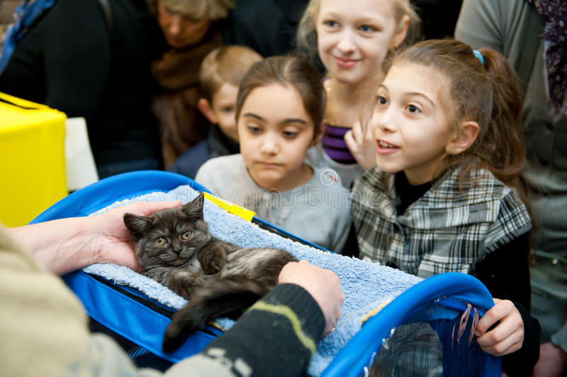 International exhibition of cats. MOSCOW - MARCH 6: Unidentified people visit an international exhibition of cats Catsburg on March 6, 2011 in the exhibition royalty free stock images