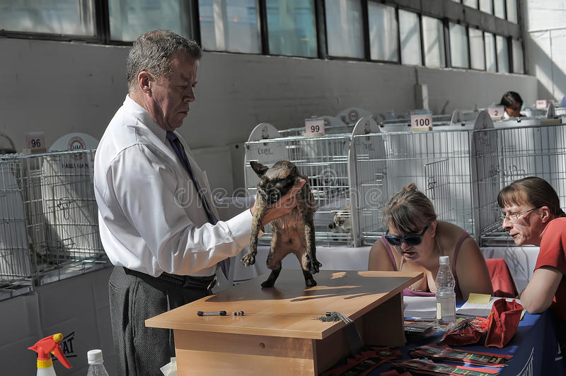 INternational exhibition of cats. Specialized Exhibition of canine, feline clubs and animals. Competitions, exhibitions, competitions, special programs Zooshow stock photos