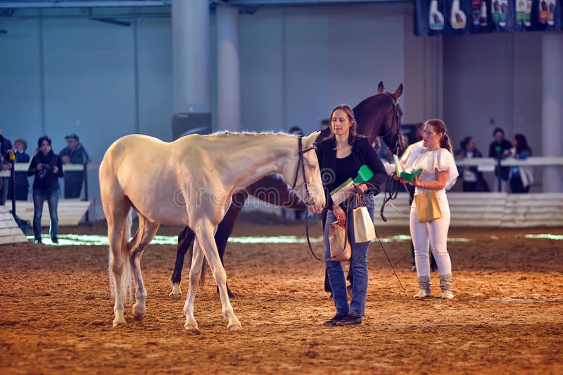 International Horse Exhibition royalty free stock photos